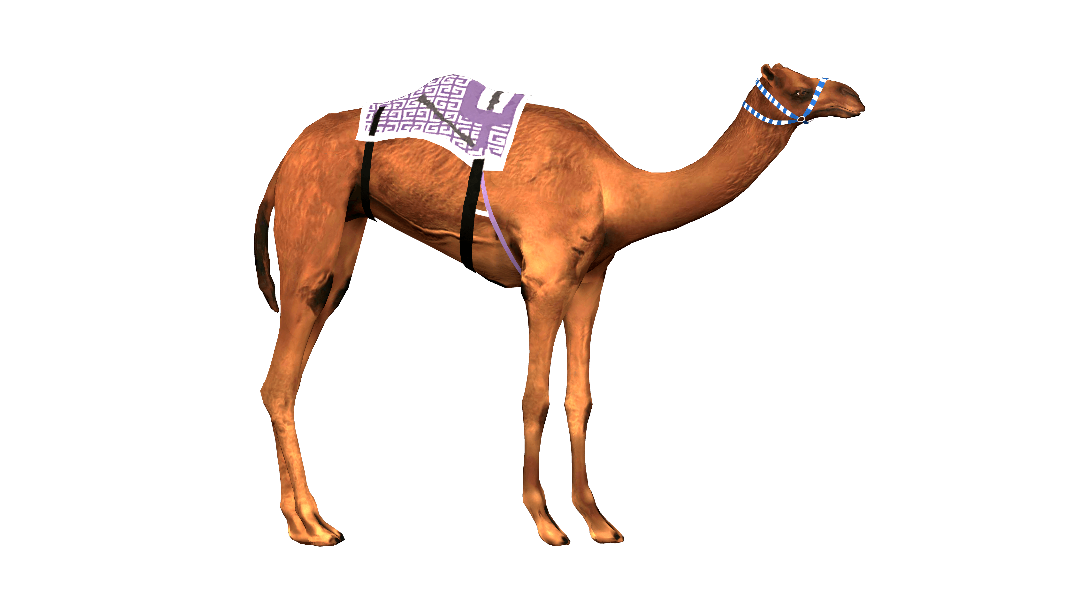 Camel From Left