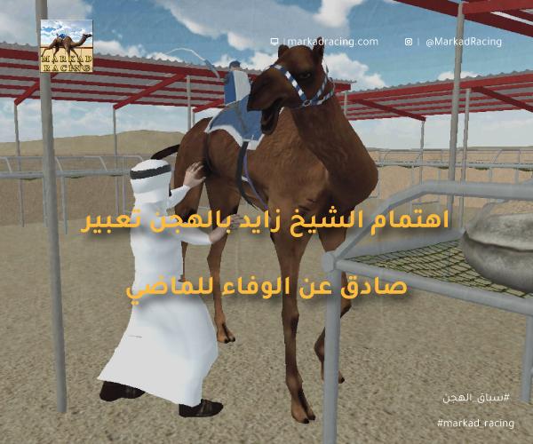 اهتمام الشيخ زايد بالهجن تعبير صادق عن الوفاء للماضي