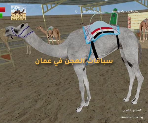 سباق الهجن في عمان
