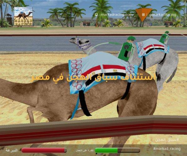 استئناف نشاط سباقات الهجن في مصر